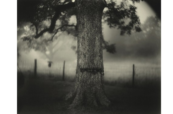 """Deep South, Untitled (Scarred Tree)"" by Sally Mann, part of her traveling restrospective, ""A Thousand Crossings,"" at the National Gallery of Art."