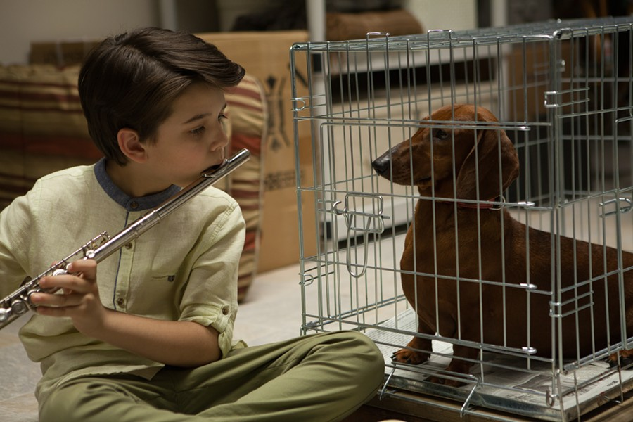 One of Weiner Dog's early owners, Remi, played by Keaton Nigel Cooke. Later in the film there is a cameo by Richmond actor Devin Druid.