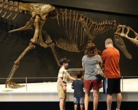 """The Science Museum of Virginia's engaging new exhibit """"Tyrannosaurs: Meet the Family."""""""