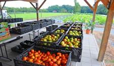 Bad Buzz: Dominion Substation Plan Upsets Organic Farmers in Varina