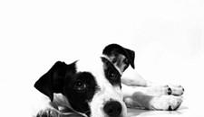 Event Pick: Dog Adoption Social at Blue Bee Cider