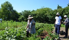 Behind the Scenes of the Community Kitchen Garden at Lewis Ginter