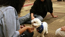 VCU Study Shows That Therapy Dogs Soothe College Students Before Exams