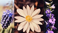VCU Posts Online Archive of Wildflower Photos by Newton Ancarrow