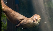 One of Maymont's Beloved River Otters Has Died