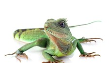 Event Pick: The Richmond Reptile Expo at the Richmond Raceway