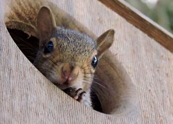 Contractor Sues Virginia Couple for $90K Over Squirrel Attack