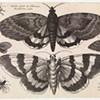 Hollar的百科全书式的眼睛:来自VMFA的Frank Raysor收藏