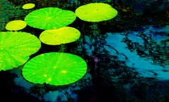 Green Floating, 2019 - Uploaded by judy@bojuart.com