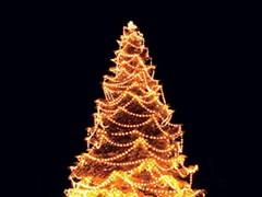 f2ae97b0_tree.jpg