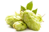 Hey Richmond, Want to Learn How to Grow Hops?