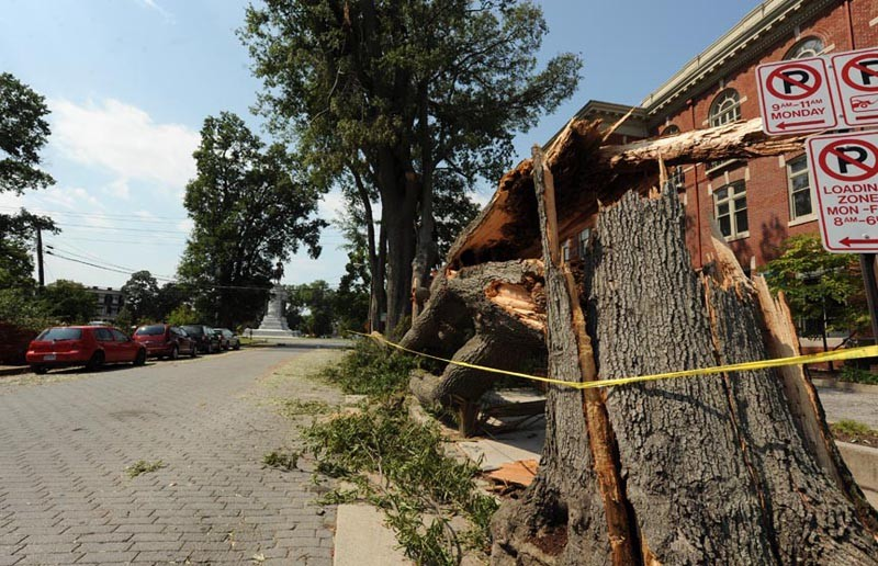 Was the city ready for Irene? Several fallen trees caused havoc on Monument Avenue. - SCOTT ELMQUIST