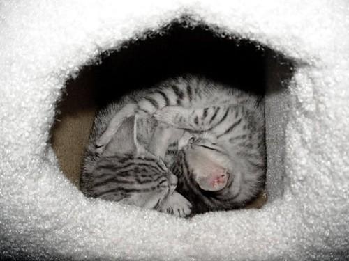 kittenscurledup.jpg