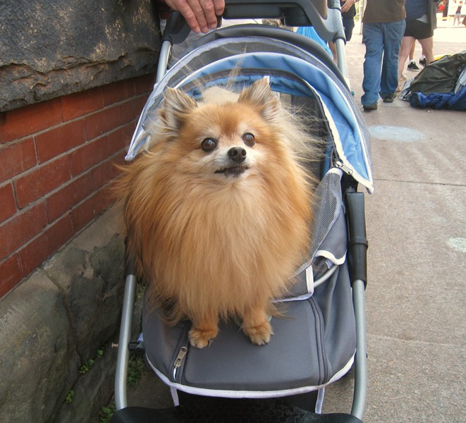 Andrew Neville's Sappy highlight: Ted, with his own stroller. - ADRIA YOUNG