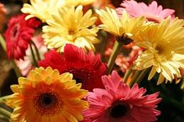 55.my.mothers.bloomers.2.jpg