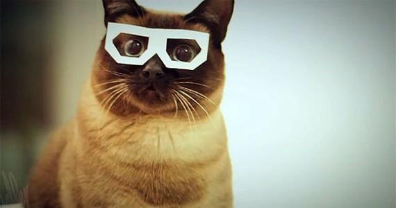 best-trend-dubstep-cat.jpg