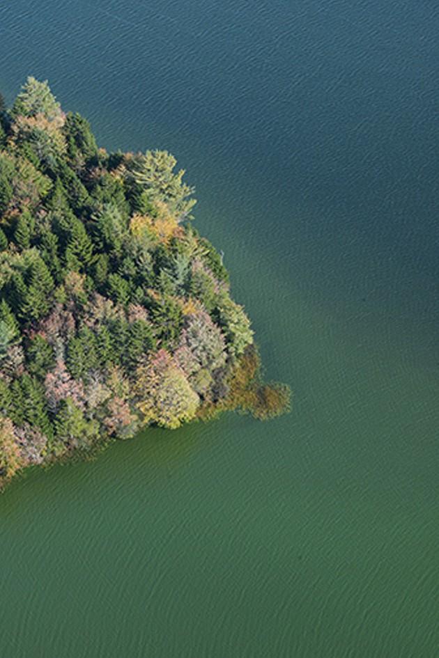 Blue-green algae blooms in a lake the APFA says is near fur farms.