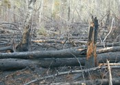 Climate change and the Spryfield fire