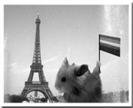 Copain de Paris