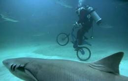 bike-riding-sharks.jpg
