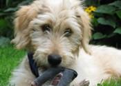 Cute Puppy Interlude