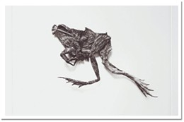 David Morrish's Frog Sprint photogravure, part of his show, Locomotive Torpor at Dalhousie.