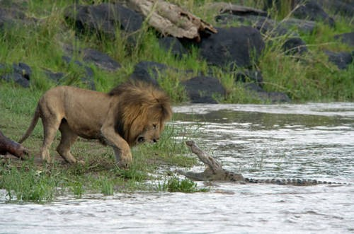 african-cats-photo2.jpg