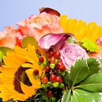 Flowers: Wild things