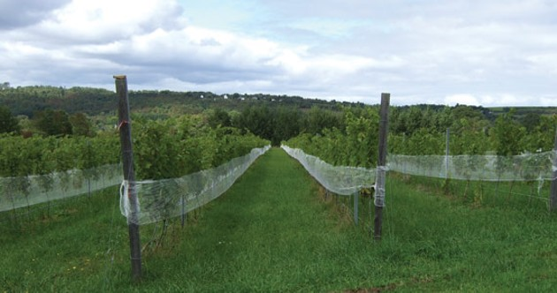 Grape times await in Gaspereau Valley.