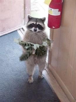 raccoon_holding_cat_jpg-magnum.jpg