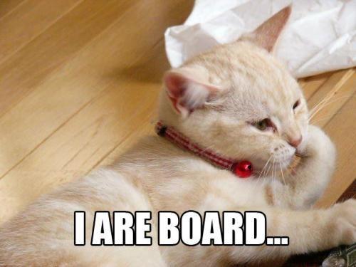 bored_cat_is_bored.jpg