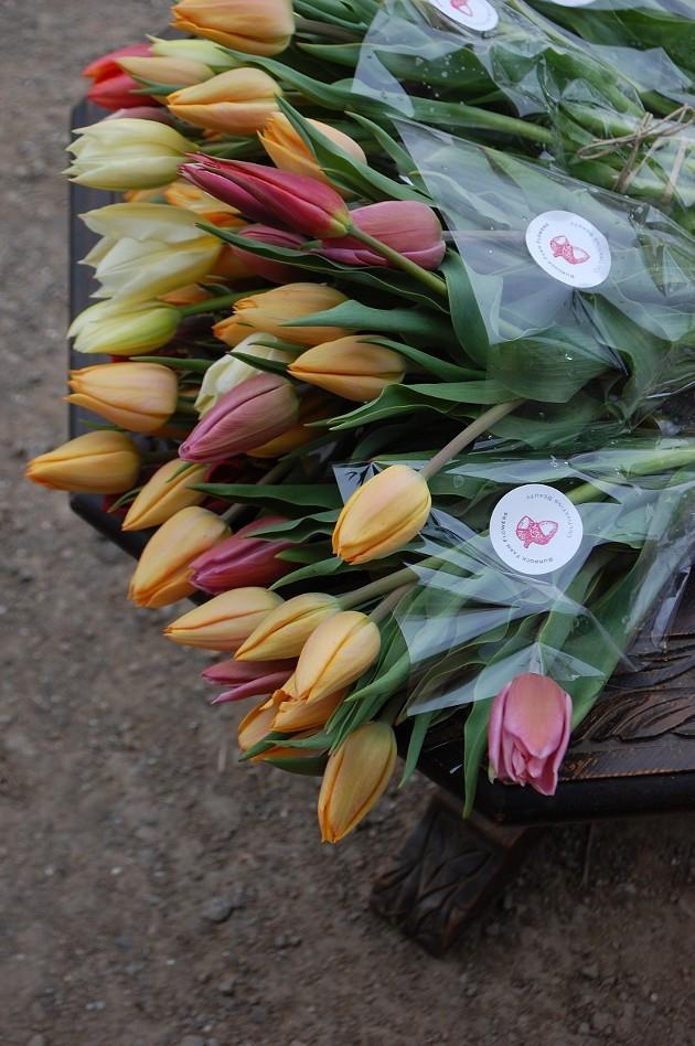 Humble Burdock's fresh tulips