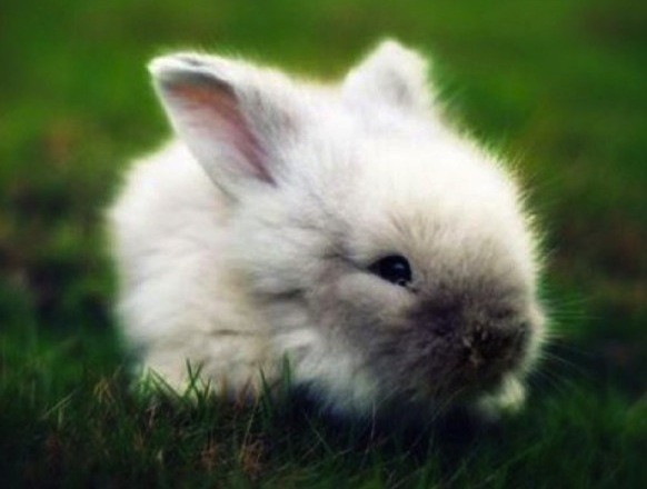 I heard there's a ton of bunnies around White Point. Mo' bunnies, mo' problems.