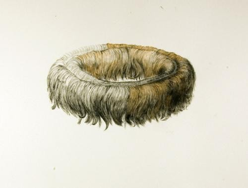 Jody Zimmer, Circle of Hair, Ink on watercolo.ur paper 22 x 30 in; 55.8 x 76.2 cm