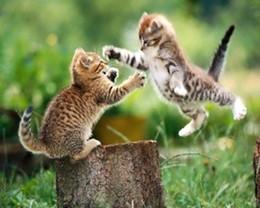kittens_jpg-magnum.jpg