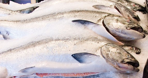 Off the hook, into your mouth. Fresh fish from local waters.