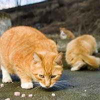Port of Halifax's cat fix