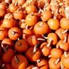 Pumped about pumpkins