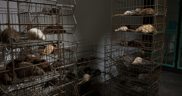 Rats are king at Cellar, open until January 4.