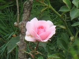 blossoms_158_jpg-magnum.jpg