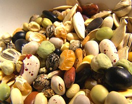 seeds053006.jpg