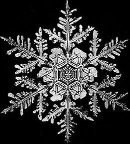 snowflake1_jpg-magnum.jpg