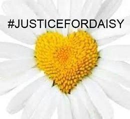 justicefordaisy_jpg-magnum.jpg