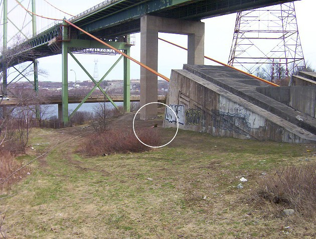The cable abutment under the MacKay Bridge, as it appeared in 2010. Holly was discovered at the base of the abutment, centre of white circle. There have been changes to the area in the intervening years, including the construction of a second fence and the re-surfacing of the abutment.