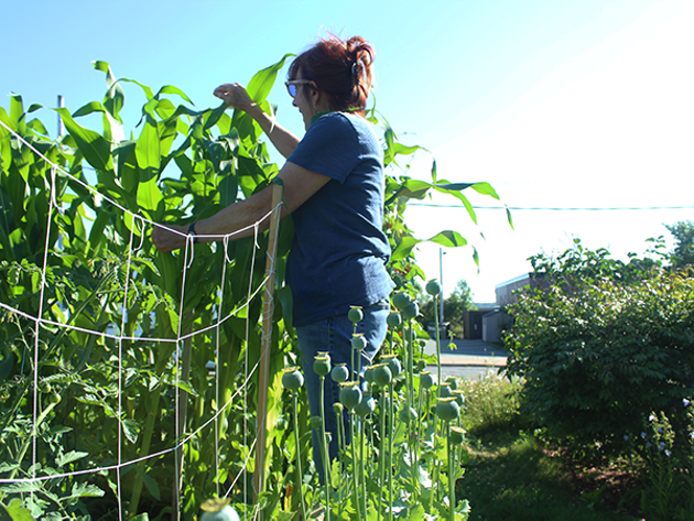 The Prescott Street community garden has 25 community garden plots, and a waitlist to get one. - SUBMITTED