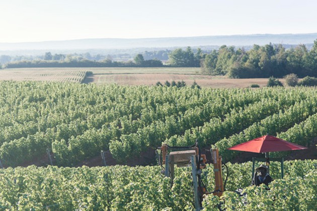 Warner Vineyards - NXN PHOTOGRAPHY
