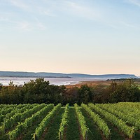 Nova Scotia wine's time to shine