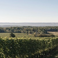 Nova Scotia's grape growth mindset