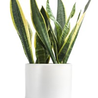 Expert advice: Three forgiving house plants