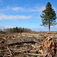 Want to reduce clearcutting? Clear out Natural Resources